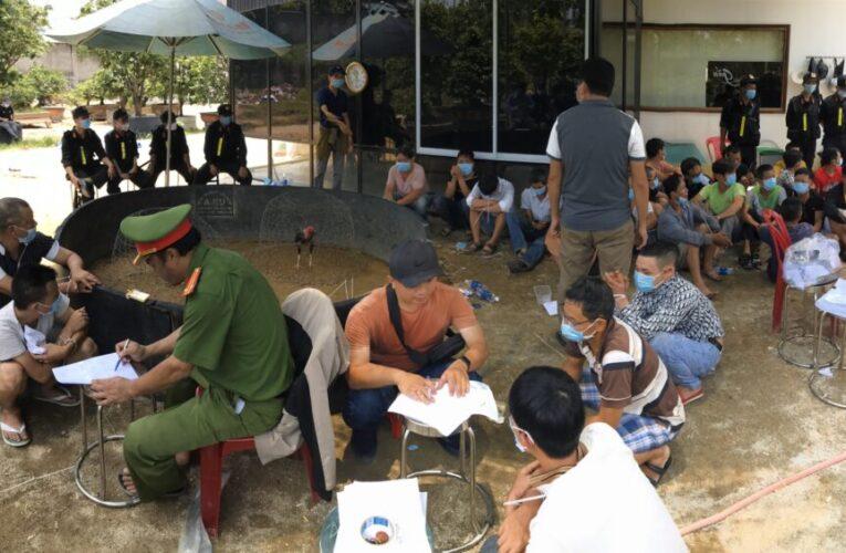 Bắc Giang tạm giữ nhóm đối tượng tổ chức cá độ đá gà
